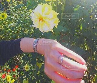 時計を覗く花の写真・画像素材[3785941]