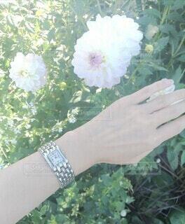 花と手の写真・画像素材[3787039]