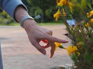 花と時計の写真・画像素材[3793024]
