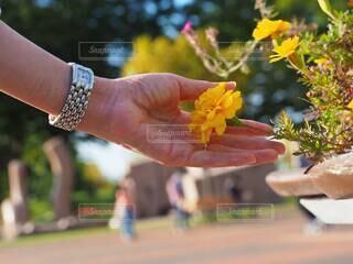 花を持つ手と時計の写真・画像素材[3793025]