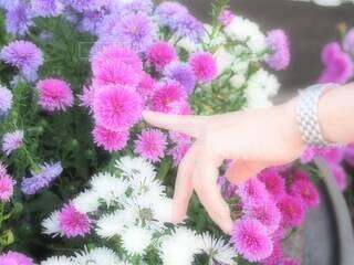 花と時計の写真・画像素材[3793026]