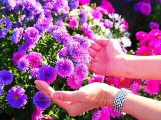 紫色の花と時計の写真・画像素材[3793176]