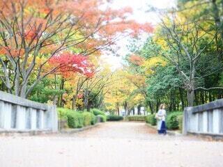 秋の散歩道を楽しむコートの写真・画像素材[3862128]