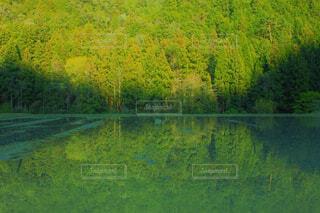 新緑の写真・画像素材[4408205]
