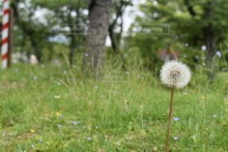 芝生で覆われた野原の上に座っている鳥の写真・画像素材[3221159]