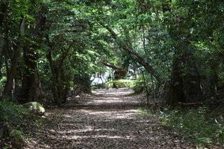 自然,風景,公園,森林,木,屋外,樹木,地面,野草,草木,枯れ葉道