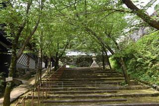 風景,公園,木,屋外,緑,階段,樹木,地面,野草,石垣,草木,江戸時代風