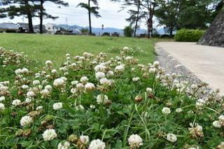 風景,空,公園,花,屋外,草,地面,野草,シロツメクサ,フローラ