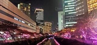 冬の桜の写真・画像素材[2721187]