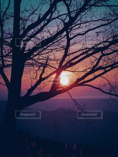 自然,風景,海,空,屋外,太陽,朝日,雲,霧,シルエット,樹木,正月,お正月,日の出,グラデーション,新年,初日の出,草木