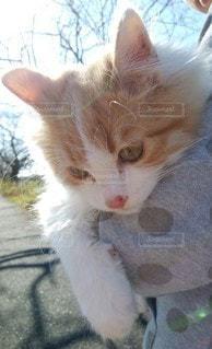 猫,動物,かわいい,散歩,ペット,子猫,人物,さんぽ,抱っこ,晴れの日,腕の中,ネコ,こねこ,だっこ,ポカポカ,お日さま