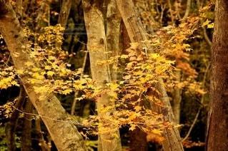 染まる森の写真・画像素材[2588400]