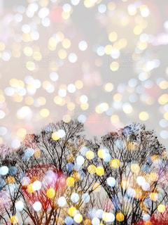 樹木とイルミネーションの多重露光の写真・画像素材[2824573]