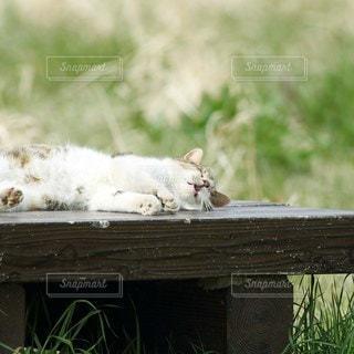 猫,動物,屋外,昼寝,草,ねこ,ペット,人物,リラックス,可愛い,木目,長閑,ネコ
