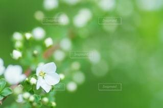 花のクローズアップの写真・画像素材[2988801]
