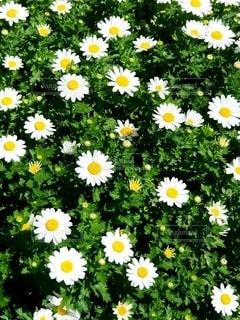 沢山の花の写真・画像素材[3140591]