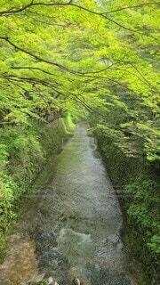 自然,風景,緑,川,森林浴,清流,流れ