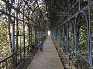 長い木のトンネルと子どもの写真・画像素材[2491026]