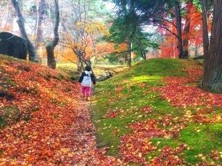 秋のもみじ狩りをする子どもの写真・画像素材[2510912]