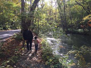 森の中を歩く親子の写真・画像素材[2513410]