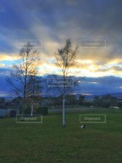 白樺のある公園にて夕暮れの写真・画像素材[2625313]