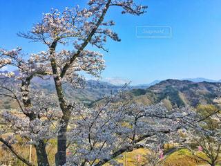 自然,風景,空,花,春,桜,富士山,屋外,山,景色,サクラ,樹木,山梨,草木,さくら,山腹