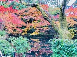 森の木の写真・画像素材[2513910]