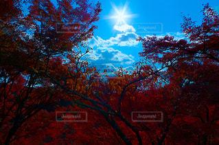 自然,風景,空,秋,屋外,太陽,葉,光,樹木,草木,カエデ
