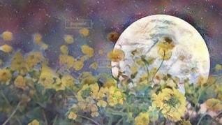 菜の花と星空との写真・画像素材[3373258]