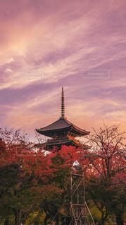 東寺の夕暮れの写真・画像素材[4008517]