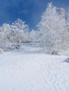 雪景色の写真・画像素材[2810960]