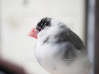 No.14685 鳥
