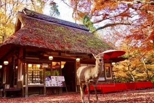 秋の紅葉フォトの写真・画像素材[2665891]