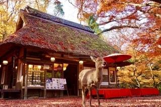 秋の紅葉フォトの写真・画像素材[2665894]