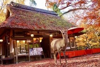 秋の紅葉フォトの写真・画像素材[2665896]