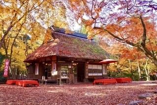 秋の紅葉フォトの写真・画像素材[2665907]