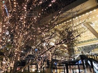 夜,屋外,綺麗,樹木,イルミネーション,都会,キラキラ,景観,アンバサダー,グランフロント大阪,シャンパンゴールド