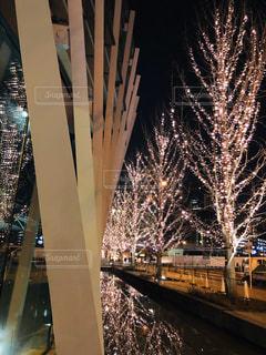 夜,屋外,綺麗,樹木,イルミネーション,都会,キラキラ,照明,アンバサダー,グランフロント大阪,シャンパンゴールド