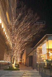 建物,夜,屋外,綺麗,樹木,イルミネーション,キラキラ,明るい,アンバサダー,グランフロント大阪,シャンパンゴールド