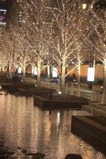 夜,屋外,綺麗,水面,反射,樹木,イルミネーション,キラキラ,明るい,アンバサダー,グランフロント大阪,シャンパンゴールド