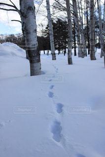 足跡の写真・画像素材[2835469]