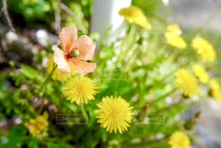 花のクローズアップの写真・画像素材[4299021]