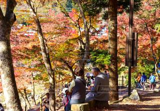「秋の香嵐渓」の写真・画像素材[2567725]