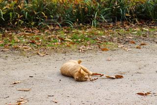 猫の写真・画像素材[2632690]