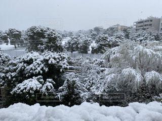 ギリシャ、13年ぶりの雪景色の写真・画像素材[4184336]