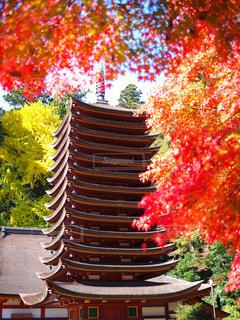 談山神社の紅葉の写真・画像素材[2511830]