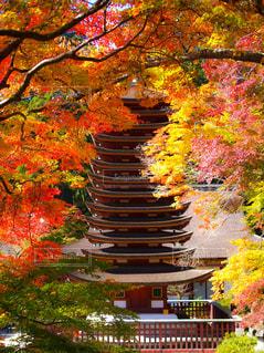 談山神社の紅葉の写真・画像素材[2511895]