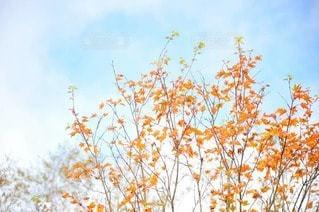 紅葉はじまりの写真・画像素材[2514545]