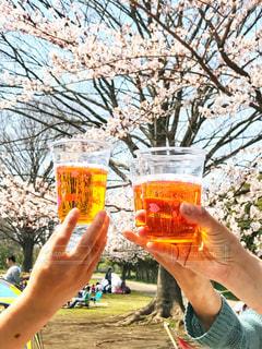 花見,グラス,ビール,乾杯,ドリンク,友達