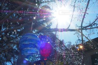 空,太陽,赤,白,青,ガラス,光,樹木